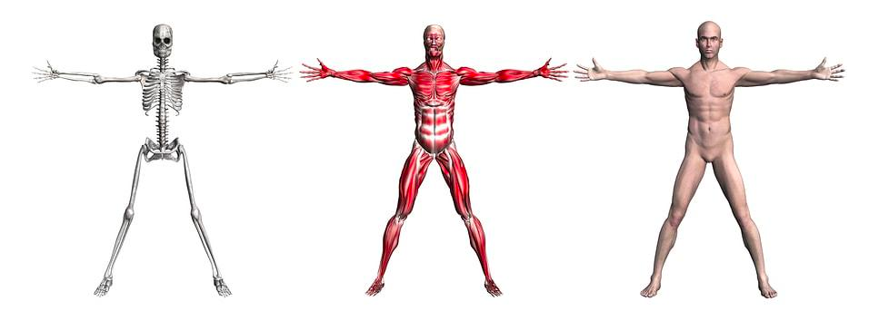 Introducción a la anatomía del miembro superior