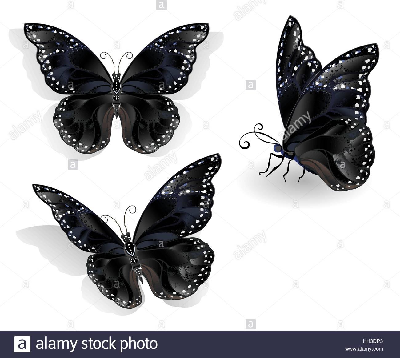 X´majaná o Mariposa Negra, Especie Endémica. CIENCIAS NATURALES Y ESPAÑOL