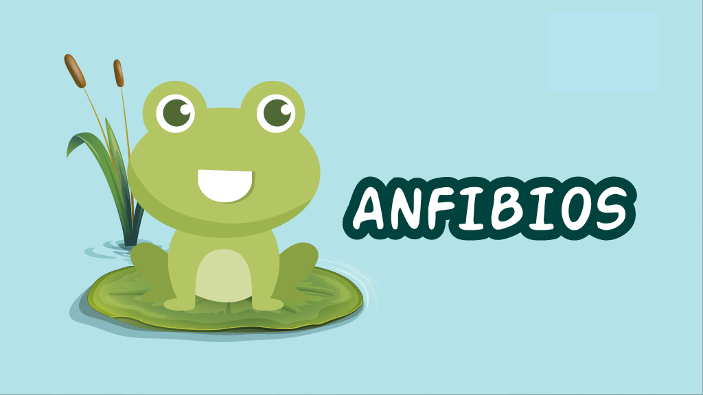 Curso Los Anfibios